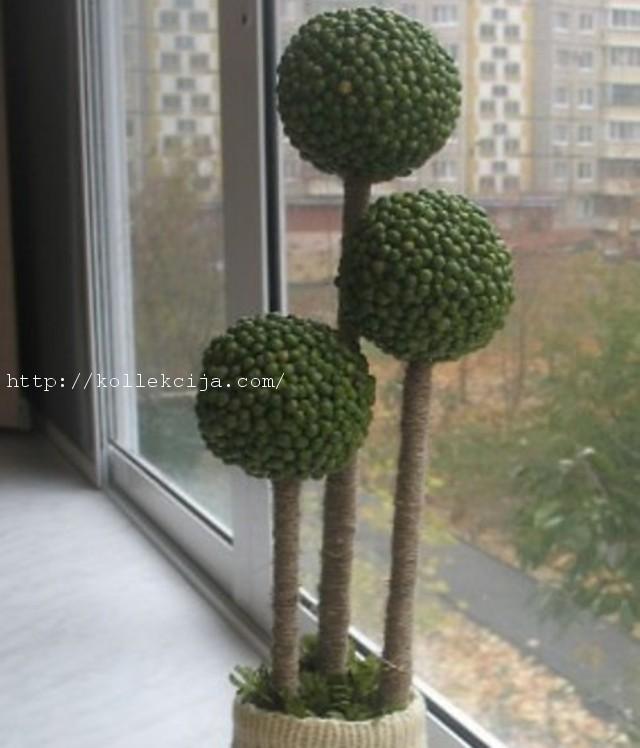 Гороховое дерево